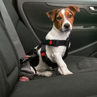 Harnais et laisse de sécurité voiture pour chien