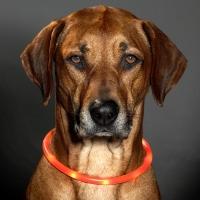 Collier lumineux pour chien LED orange
