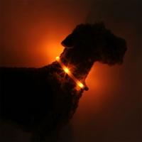 Collier lumineux pour chien LEUCHTIE Plus orange foncé