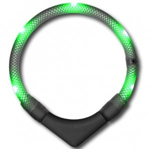 Collier lumineux pour chien LEUCHTIE Plus vert transparent