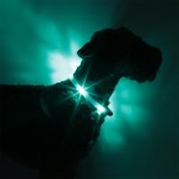 Collier lumineux pour chien LEUCHTIE Premium bleu turquoise