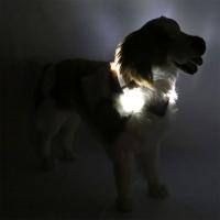 Collier lumineux pour chien LEUCHTIE Premium blanc