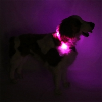 Collier lumineux pour chien LEUCHTIE Premium Easy Charge rose