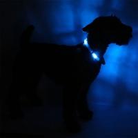 Collier lumineux pour chien LEUCHTIE Premium Easy Charge bleu transparent