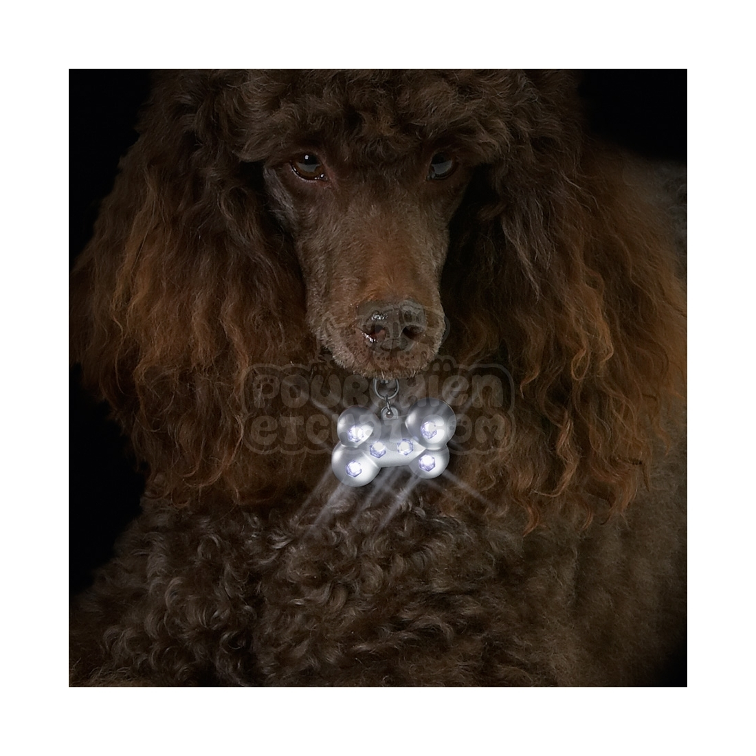 pendentif lumineux pour chien led os. Black Bedroom Furniture Sets. Home Design Ideas